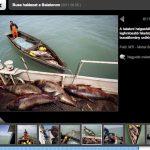 Mohai Balázs bemutatja: balatoni busa halászat