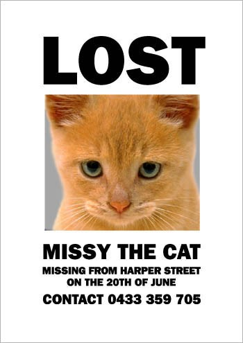 05MissyTheMissingCat