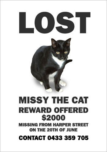 06MissyTheMissingCat