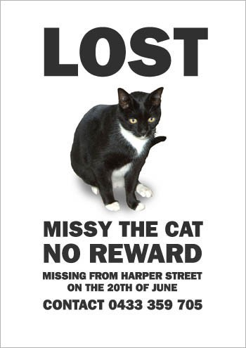 07MissyTheMissingCat