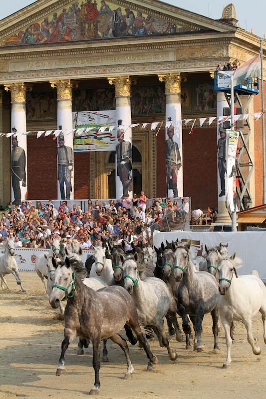 Vagta-Mucsarnok-lovak