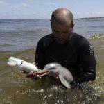 Elképesztő cukiság: delfinbébi etetés