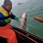 M Schmidt János látványos balatoni halászaton