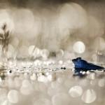 Kihirdették a 2011-es év természetfotósait