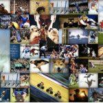 Megszűnik a Sports Illustrated Snapshot galéria