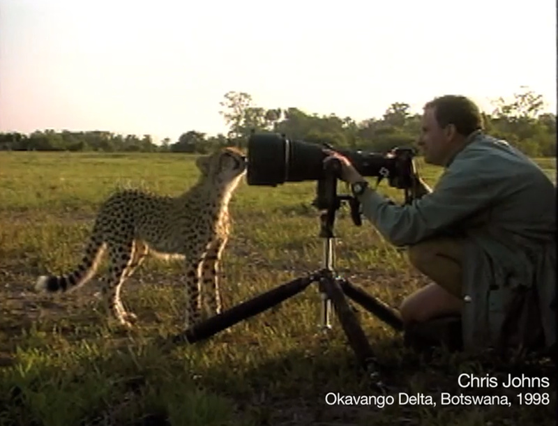 Cheetah camera lens ChrisJones NationalGeographic Így merevíti ki egy gepárd mozgását a National Geographic