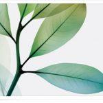 Legális PhotoShop ingyen az Adobe-tól