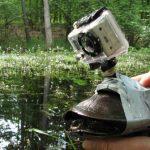 Vad Magyarország: Kimaradt a kamerás teknős