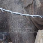 Hiper-megacuki kiselefánt tarolta le a sajtót