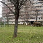 Fotószafari Zalaegerszegen: elefánt a parkban