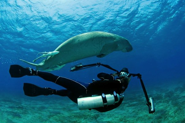 SelmecziDaniel-scubaDiving-tv-underwater-photographer