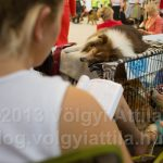 Wolrd Dog Show 2013 Budapest