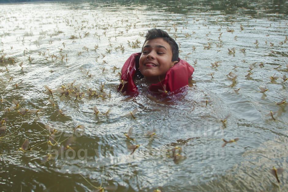 Boy swims among long-tailed mayflies