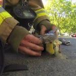 Cukiság: újraélesztette a macskát a vegán tűzoltó