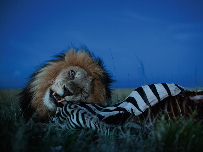Fotó: Michael Nichols/National Geographic