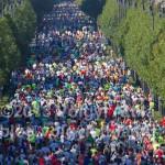 Tűt keresni a fél-maraton futók szénakazlában