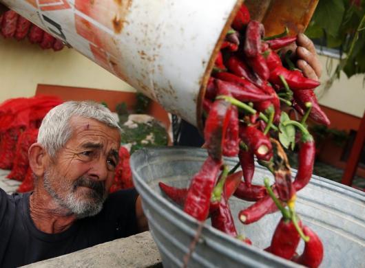 Fotó: Balogh László/Reuters