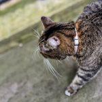 Angol macska a magyar politika kereszttüzében