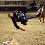 Felöklete a fotóst a rodeo bika