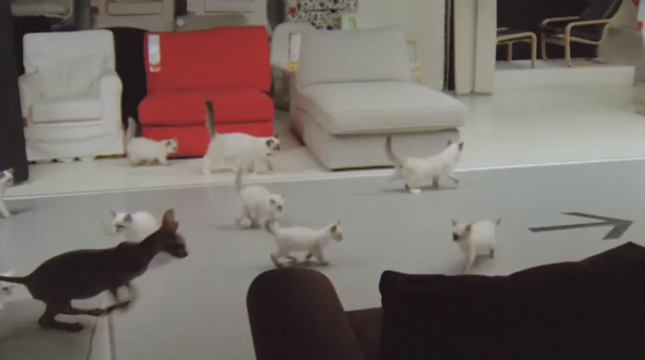 Cat-advert-sourceIkea