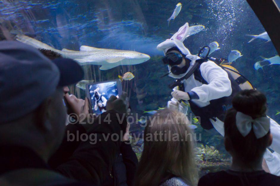 Húsvéti nyuszi a cápák között