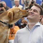 Kutya Cannes vörös szőnyegén