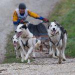 Szánhúzó kutyák Európabajnoksága