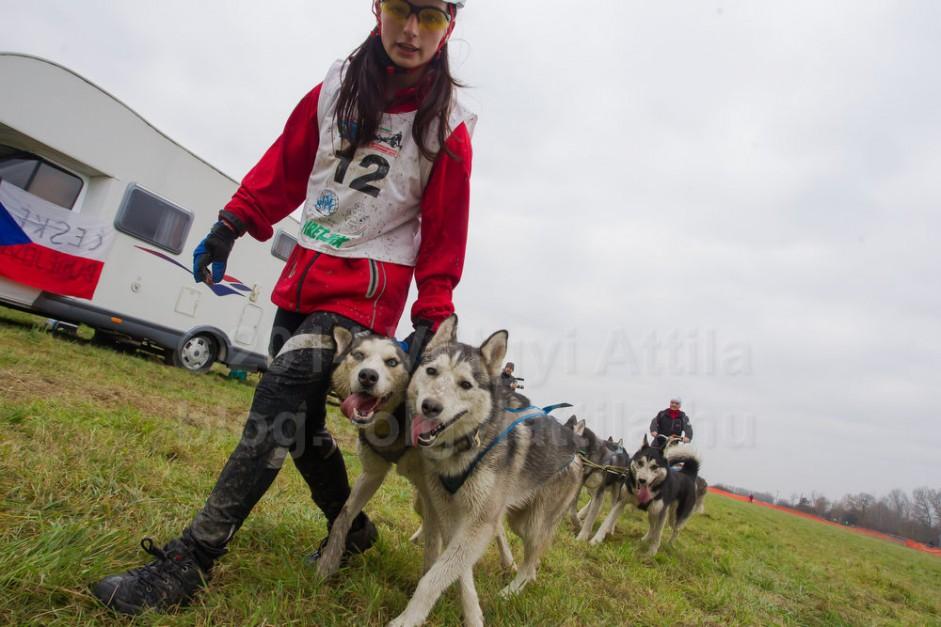http://photos.volgyiattila.hu/gallery/Sleddog-FISTC-Cart-European-Championships-2014/G0000Q1ou25jB.kc/C0000w8HgW32F7Xw