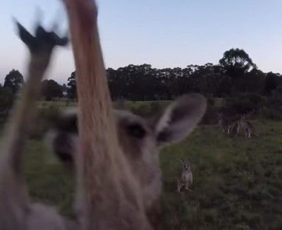 Kangaroo-hit-drone-NewZulu-Youtube