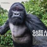 Lecsapta a természetfotóst a dühös gorilla