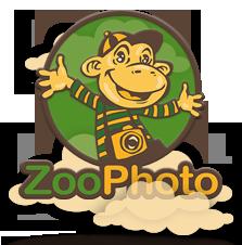 ZooPhoto-logo