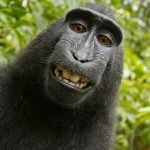 A történelem legnagyobb szerzőjogi majomkodása