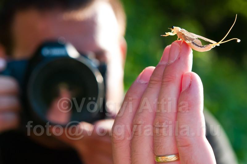 Fotósok és a tiszavirágzás