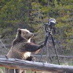 Nikon D4: medve támadás után