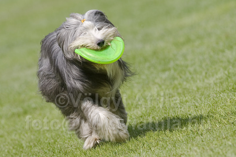 http://attilavolgyi.photoshelter.com/gallery/Flydogs-frizbee-euro-championships-2009/G0000uLY1j.vcWrM/C00005pmHqsX5uR0