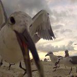 Sirályetetés GoPro kamerával
