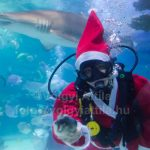 Karácsonyi készülődés a Tropicarium cápái közt