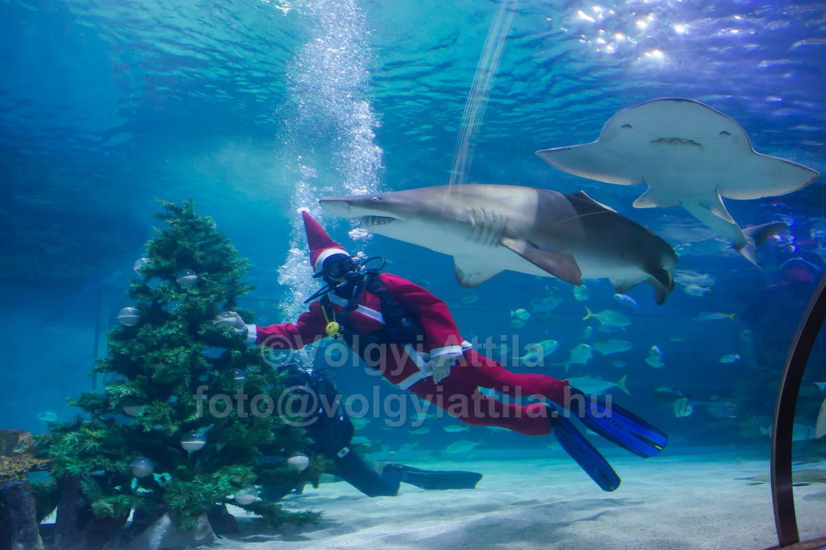 http://photos.volgyiattila.hu/gallery/Tropicarium-scuba-diver-Christmas-2012/G00009CRUfSZQAUE/C0000UzRQmJwzl3Y