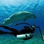 Tévében a magyar cápafotós dokumentumfilmje