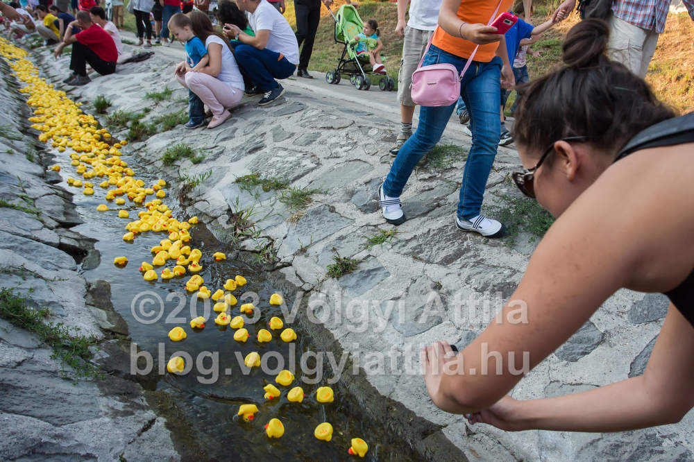http://attilavolgyi.photoshelter.com/gallery/Rubber-Duck-Race-2013/G0000_ZRzVcWYUBc/C0000c.w2_AEruxU