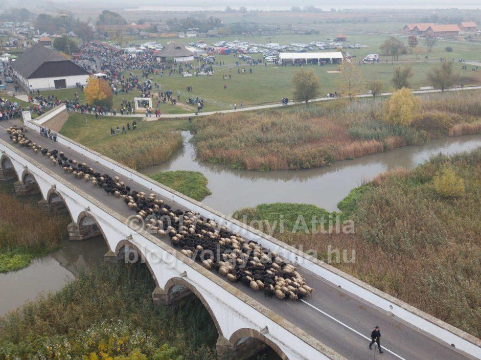 Így kel át a juhnyáj a Hortobágyi Kilenclyukú hídon