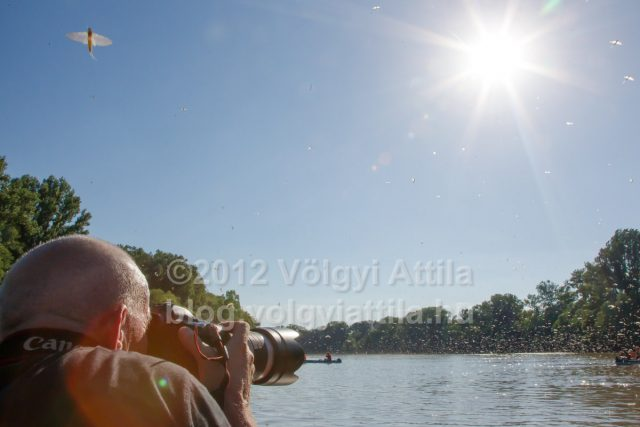 https://photos.volgyiattila.hu/gallery/Tiszaviragzas-fotosok-Photographers-at-Blooming-of-Tisza/G0000wxQ7o5ec7Sg/C0000EXxqiLmFfsM